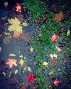 Puddle full of colourful leaves