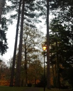 Lamppost illuminated in wooded park