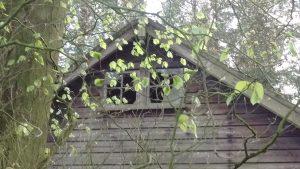 Spring leaves and broken windows