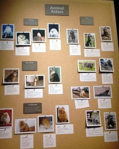 Pictures in Warner Bros Leavesden studios paying tribute to animal actors in the Harry Potter series