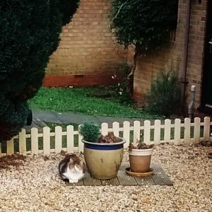 Cat posing in line with flowerpots.