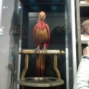Fawkes the phoenix in his display case