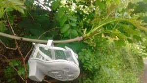 Baby girl's fancy shoe hanging from a tree limb