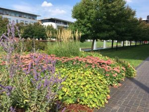 Gardens and fountains at University of Warwick